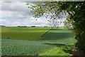 SE9554 : By Low Wood, near Tibthorpe by Paul Harrop
