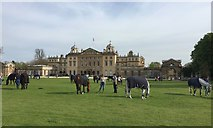 ST8083 : Badminton Horse Trials 2016: hand-grazing by Jonathan Hutchins