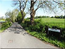 H5575 : Striff Lane, Merchantstown by Kenneth  Allen