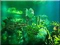 ST5872 : At Bristol Aquarium, 1 by Jonathan Billinger
