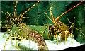ST5872 : At Bristol Aquarium, 2 by Jonathan Billinger