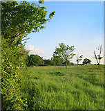SP3208 : Grassy Meadow at Curbridge by Des Blenkinsopp