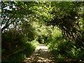 SX2870 : Pensilva - Rough Road by James Emmans