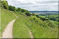 TQ1350 : Path, Denbies Hillside near Dorking by Alan Hunt