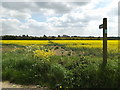 TM1652 : Footpath to Ashbocking Road by Adrian Cable