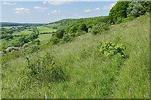 TQ1450 : Chalk grassland, Denbies Hillside by Alan Hunt
