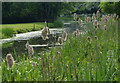SK7694 : Bulrushes along the Chesterfield Canal by Mat Fascione