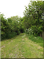 TM0950 : Link Lane Byway to The Lane by Adrian Cable