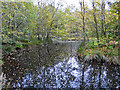 NY5661 : Pond in Miltonrigg Woods by Rose and Trev Clough