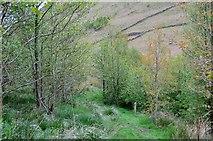 NT1511 : Path at Carrifran by Jim Barton