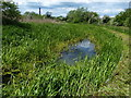 SK5978 : Overgrown feeder channel of the Chesterfield Canal by Mat Fascione