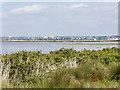 SZ0387 : The Lagoon, Brownsea Island by David Dixon