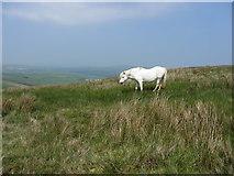 SN0631 : Horse on Foel Eryr by Gareth James