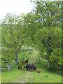 SP2113 : Cows and calves, Barrington Farm by Vieve Forward