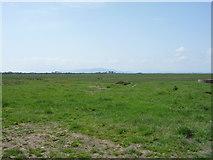 NY1853 : Grazing near Salt Coates by JThomas