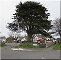 SS8377 : Dominant tree, Pine Close, Porthcawl by Jaggery