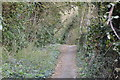 TQ3909 : Footpath, Ashcombe Hollow by N Chadwick