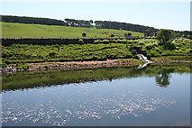 NT1966 : Clubbiedean Reservoir by Anne Burgess