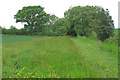 TL8238 : Footpath on arable field boundary, Gestingthorpe by Roger Jones