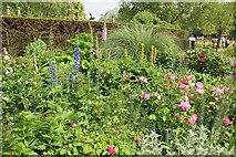 TQ2879 : Flower bed, Hyde Park by Derek Harper