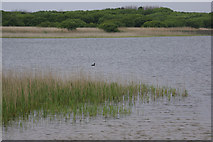 SS7981 : Kenfig Pool by Stephen McKay
