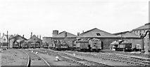 NZ4057 : Sunderland South Dock Locomotive Depot, 1953 by Walter Dendy, deceased