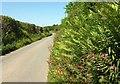 SS2908 : Lane to Broomhill Cross by Derek Harper
