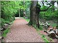 SU6256 : Woodland Trail in Morgaston Wood by Des Blenkinsopp