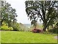 SW8438 : Trlissick Gardens, Cornwall by Derek Voller