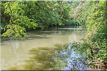 SP3365 : River Leam from Riverside Walk by David P Howard