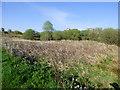 NS3372 : Small marsh near Port Glasgow by Thomas Nugent