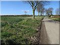 TG1735 : Road past Thurgarton Hall by Hugh Venables