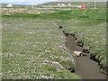 NF8774 : Salt marsh at Trumaisgearraidh by M J Richardson