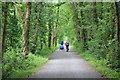 SH7118 : The Mawddach Trail near Dolgellau by Jeff Buck