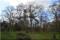 TQ1876 : Treetop Walkway by N Chadwick