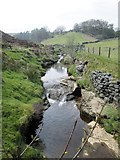 SE1265 : Bradstone  Beck  running  down  toward  the  River  Nidd by Martin Dawes
