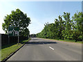 TL8882 : A1066 Thetford Road & Roadsign by Adrian Cable