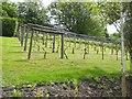 SU0053 : The vineyard at West Lavington Manor by Oliver Dixon