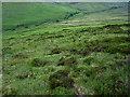 R9522 : Heath and Stream by kevin higgins