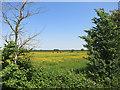 SU3791 : Along Cow Lane by Des Blenkinsopp