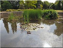 SJ9090 : Ducks and water lilies by Gerald England