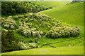 SE8255 : Spur clad in hawthorn, in Deep Dale by Trevor Littlewood