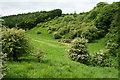 SE8457 : Slope with hawthorn bushes by Trevor Littlewood