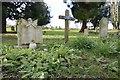 SU5630 : Primroses on the Grave by Bill Nicholls