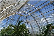 TQ1876 : Inside The Palm House by N Chadwick