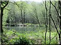 SE2259 : Pond  in  the  Wood by Martin Dawes