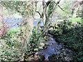 SE2059 : Fringill  Dike  entering  River  Nidd by Martin Dawes