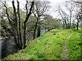SE2061 : Nidderdale  Way  alongside  the  River  Nidd by Martin Dawes