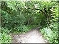 SJ8543 : Dark Wood, Clayton by Jonathan Hutchins