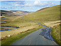 SN9071 : Sheep in the Road, Elan Valley by David Dixon